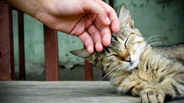 Кошка ласкается