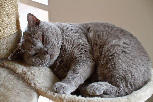 Симптомы иммунодефицита у кошек