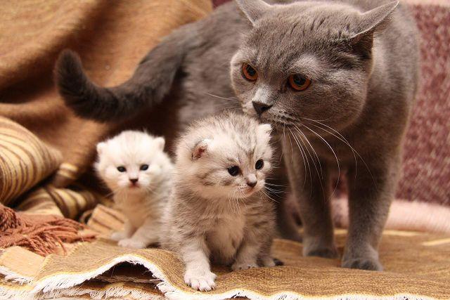 Кошка ухаживает за котятами