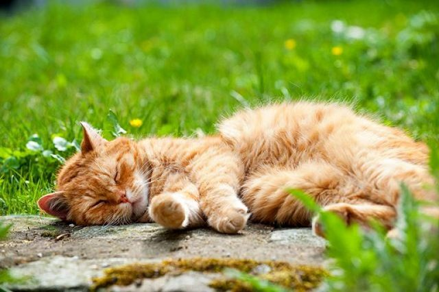Кошка спит на улице