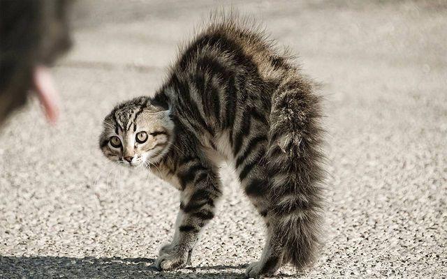 Кот на всех шипит и прячется