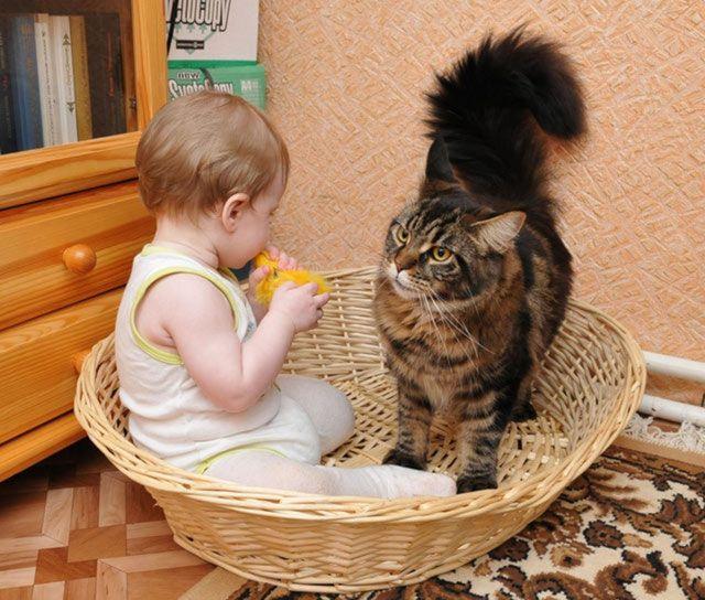 Кошка с машышом