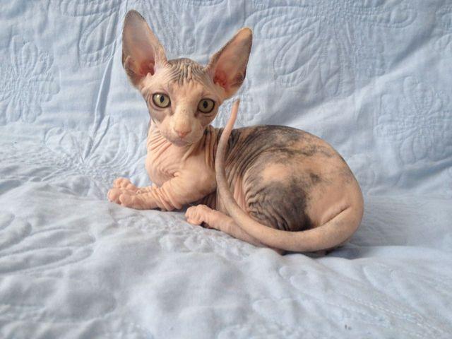 Кошики Бамбино