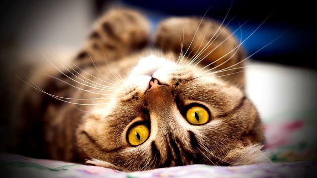 Если у кота отпадают усы