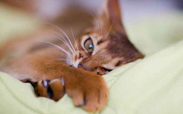 Усы у кота