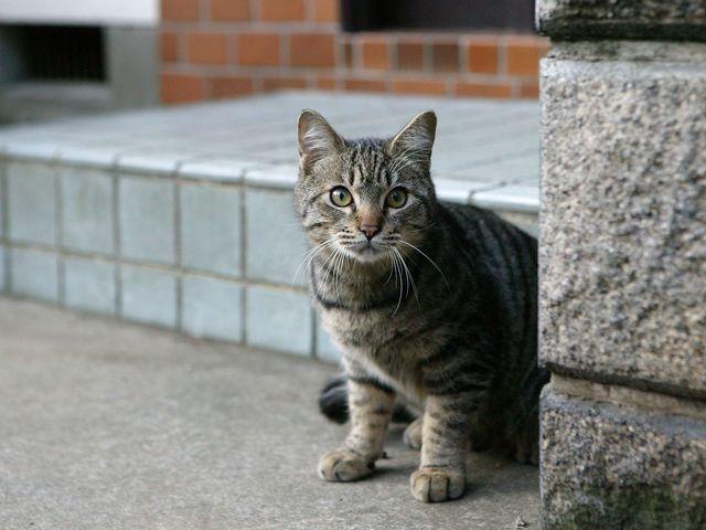 Потерялся кот: что делать