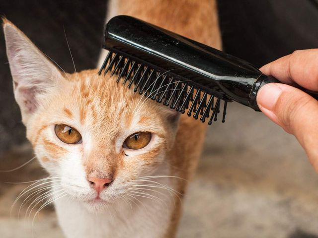 Вычесывание кота
