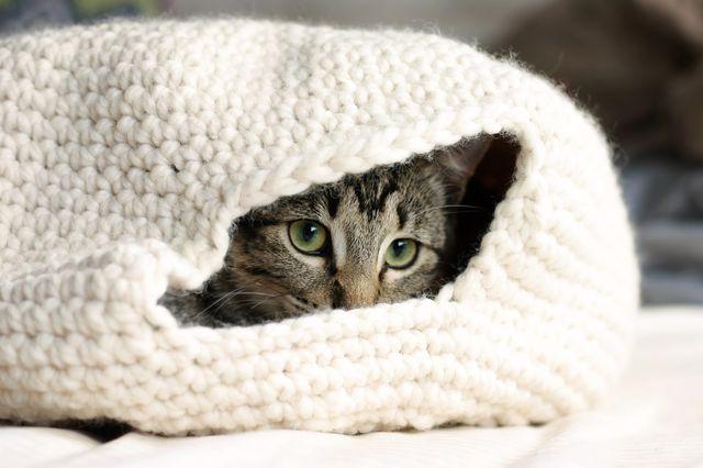 Вязаный домик для кошки своими руками