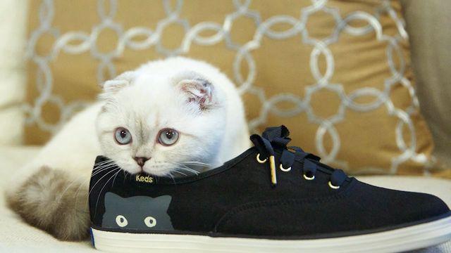 Кошка гадит в обувь