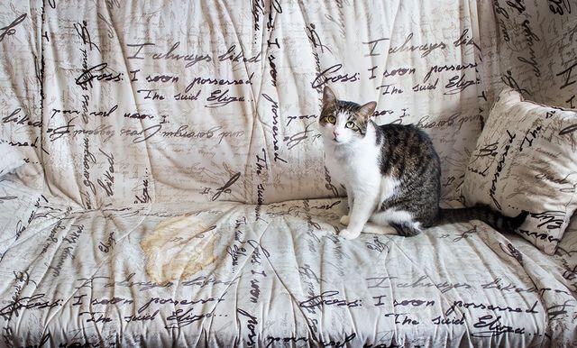 Лужа на диване и кошка