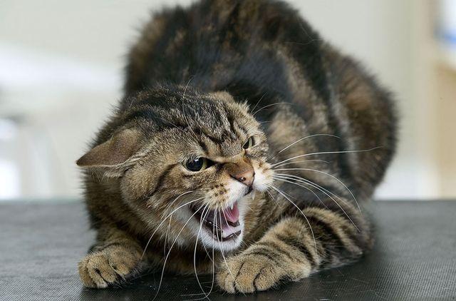 Бешенство у котят