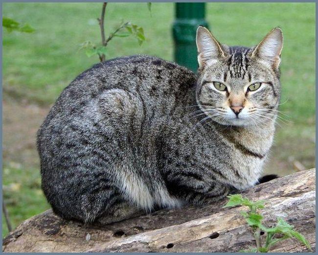 Кот сидит на земле