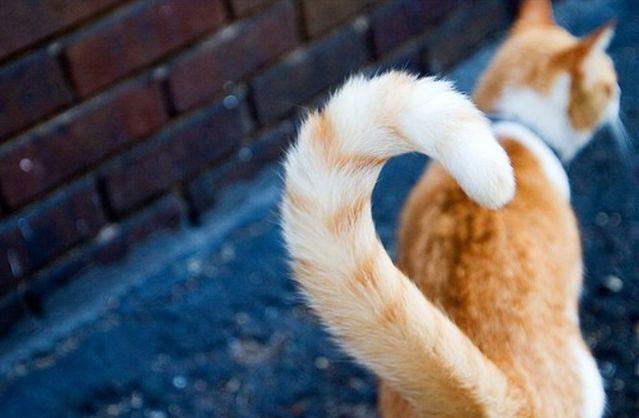 Кошачий язык тела