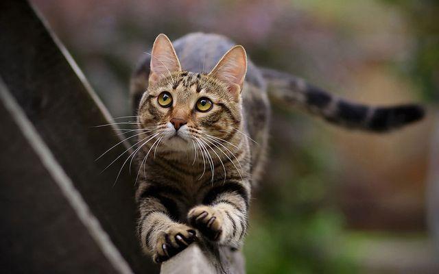 Кошка виляет хвостом
