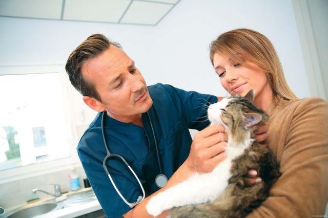 Отказывают почки у кота: симптомы, что делать, можно ли спасти
