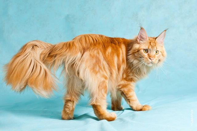 У кота сальный хвост