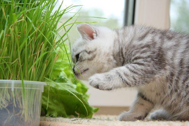 Что делать чтобы у кота не скатывалась шерсть