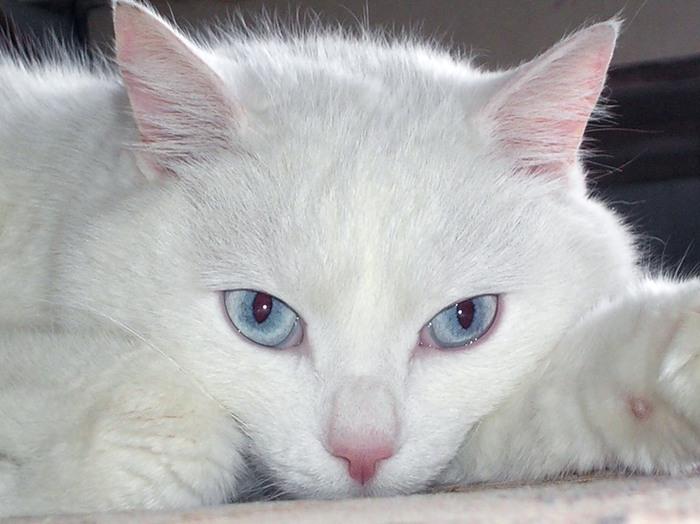 Как общаться с глухим котом