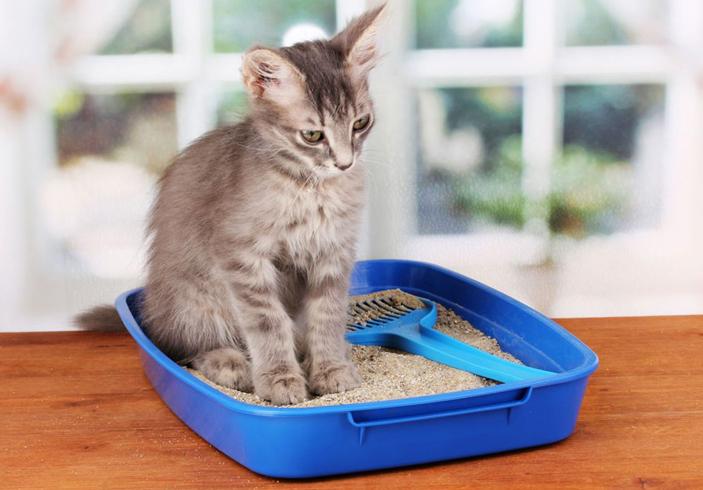 Причины полиурии у котов