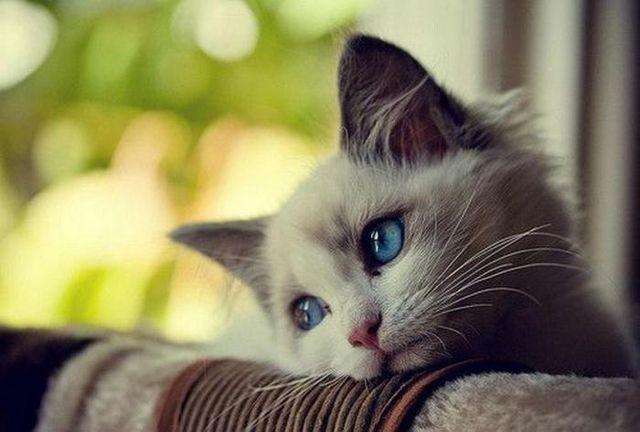 кошка нездорова