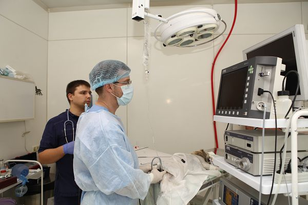 Гастроскопия в ветклинике.