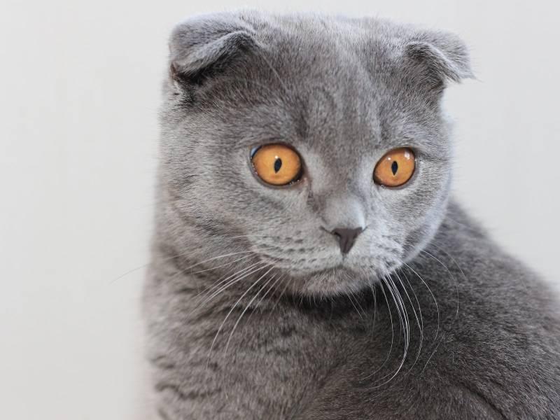 Почему у котов уши холодные