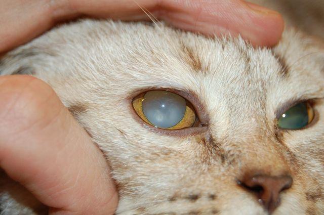 больной глаз у кота