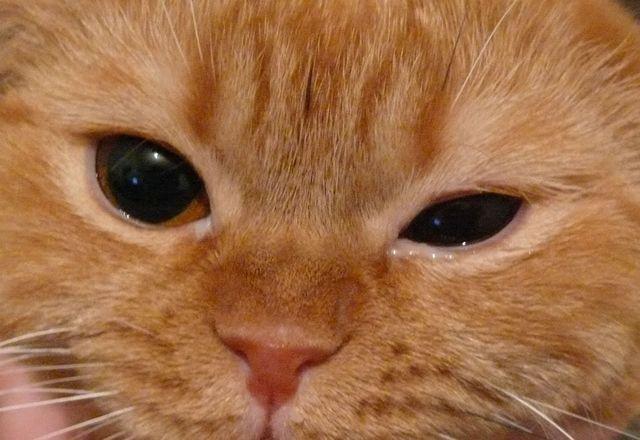 больной глазик у кошки