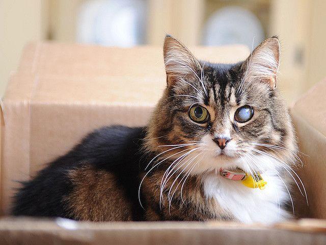 кошка с больным глазом