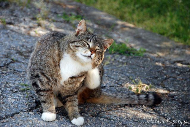 Кошка чешет уши