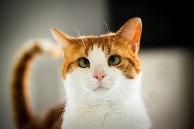 Методы лечения косоглазия у кошек