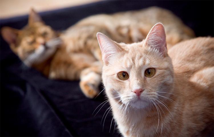 Как определить косоглазие у кошек