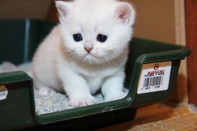 нарушения мочеиспускания у кота