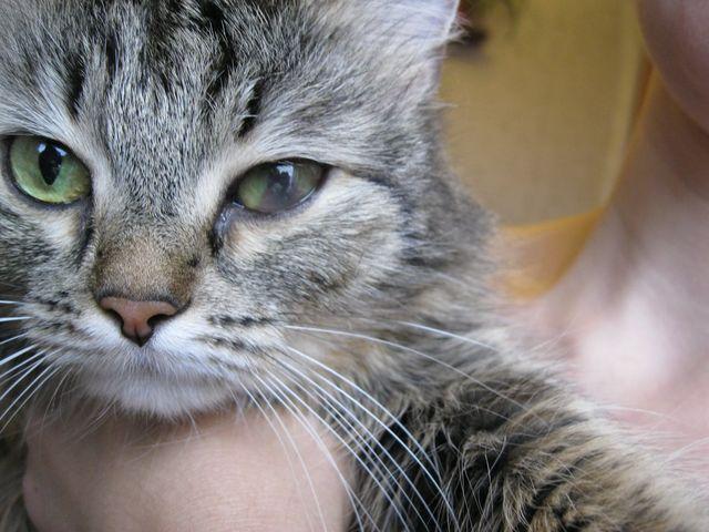 помутневший глаз у кота