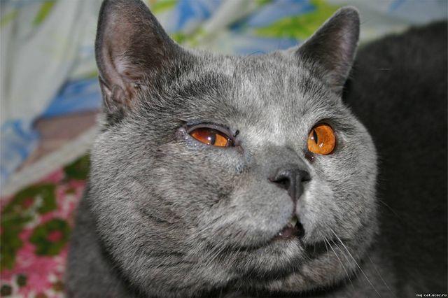 что делать если у кота помутнел глаз