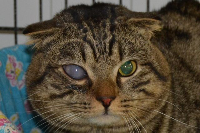 у кота помутнел глаз