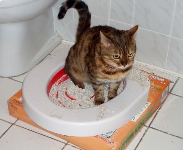 Как сделать так чтобы котенок покакал