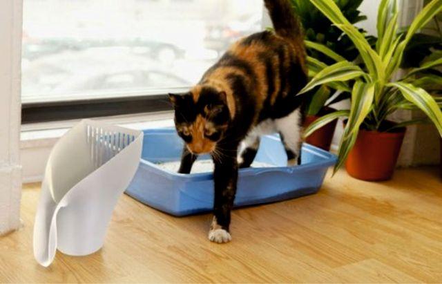 Симптоматика недержания у кошки