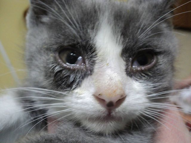 Болят глаза у кошки