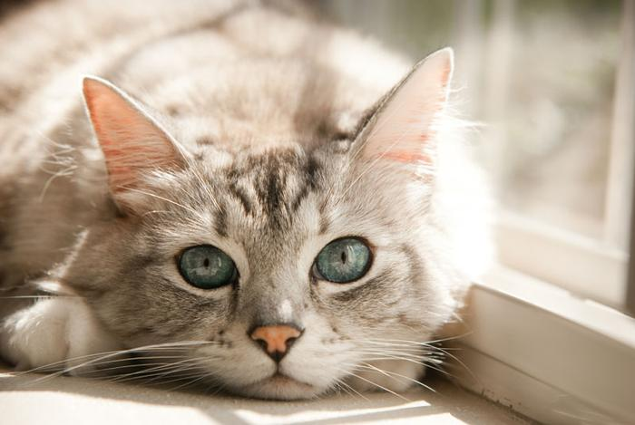 Ушные клещи у кошек: этиология