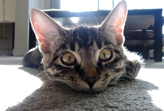 у кошки болит ухо и пахнет thumbnail