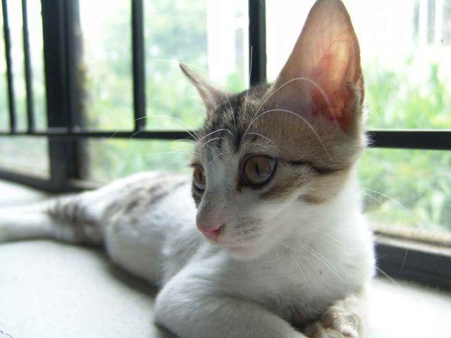 Народные средства для глаз коту