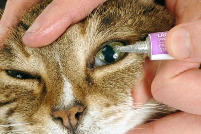 промывать кошке глаза