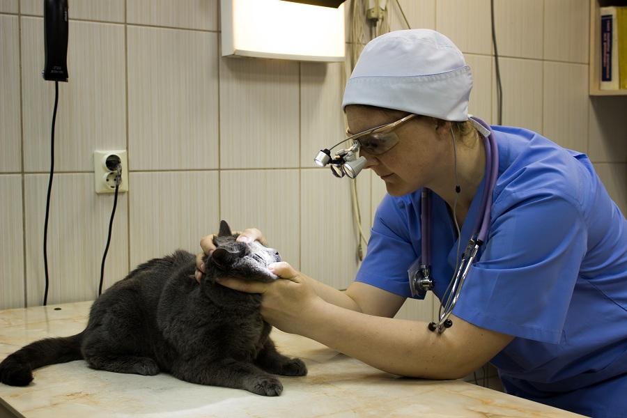 Причины слепоты у кошек