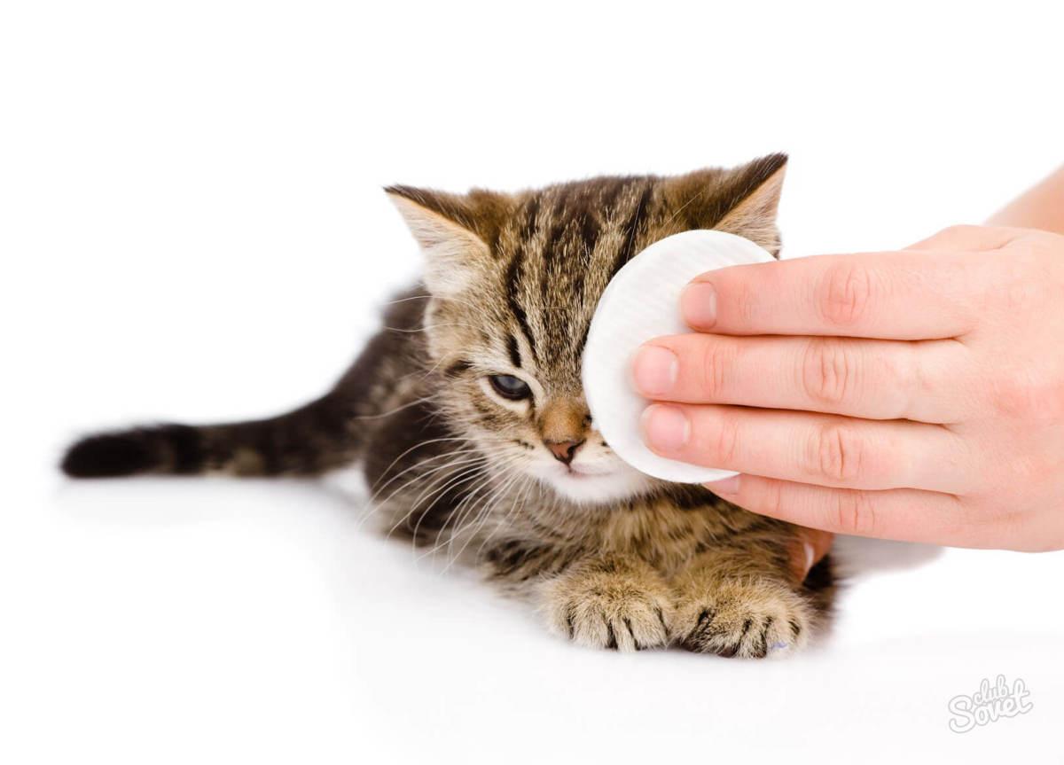 Профилактика слезоточивости глаз у кошки