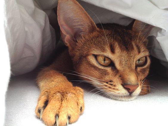 кошка с недержанием