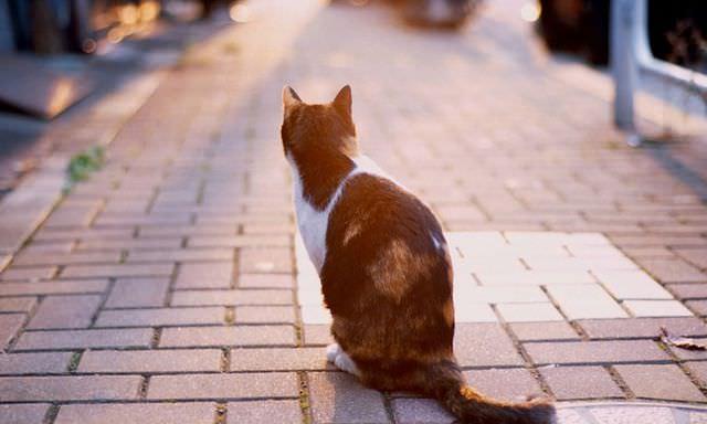 Кот сидит на тротуаре