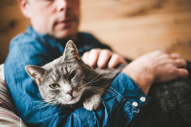 Кот на рухах у хозяина