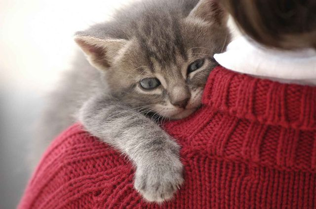 Котенок на плече хозяйки