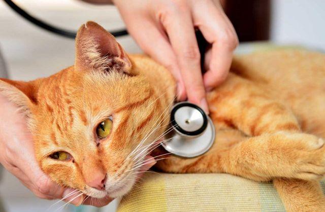 Обследлование кота
